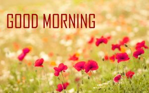 Flower Good Morning Wallpaper Pictures Download