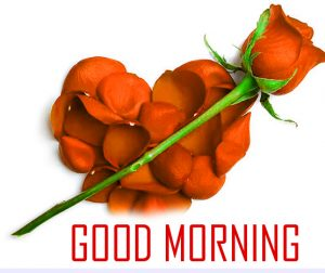 Flower Good Morning Photo Pictures For Whatsaap