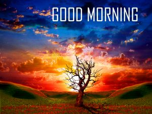 Best New Amazing Good Morning Photo Pictures For Whatsaap