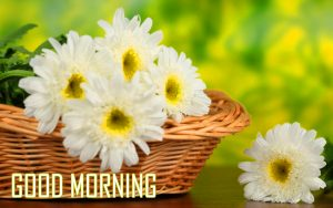 246 good morning images photo pictures with flowers hd download flower good morning images pics download mightylinksfo