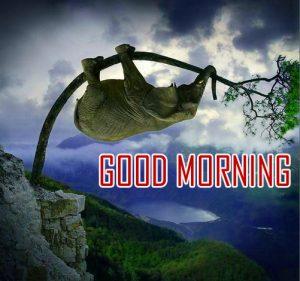 Funny New Amazing Good Morning Photo Pics Wallpaper