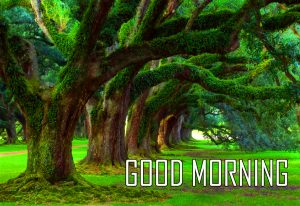 Best New Amazing Good Morning Wallpaper IMAGES Photo