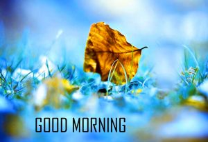 Best New Amazing Good Morning pics Wallpaper For Facebook