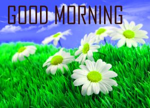 Flower Good Morning Photo Pictures