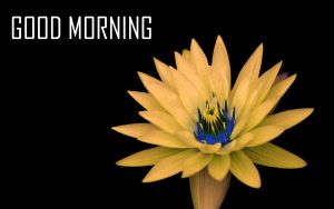 Flower Good Morning Pictures Free Download