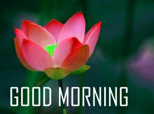 Flower Good Morning Photo Pics Pictures Free Download