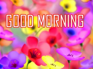 Flower Good Morning pictures images free download