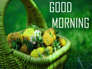 Flower Good Morning Images Pics Free Download