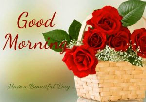 Good Morning Monday Images Wallpaper With Red Rose