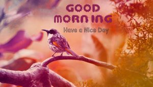 Good Morning Monday Images Wallpaper HD Download For Facebook