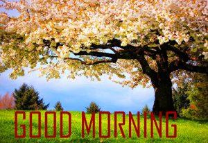 Flower Good Morning Photo Pics