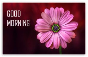 Flower Good Morning Images Wallpaper In HD