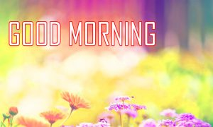 Flower Good Morning Pictures Download