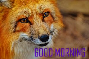 Animal Good Morning Images For Whatsaap