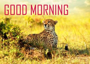 Animal Good Morning Images Pictures Download