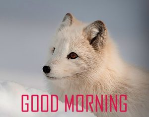 Cute Animal Good Morning Images Pictures Free Download