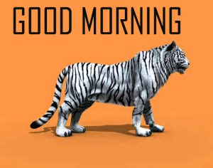 Animal Good Morning Images Photo Pics Download