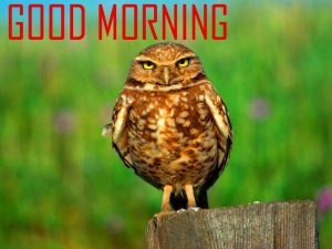 Animal Good Morning Images Download For Whatsaap