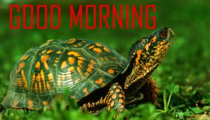 Animal Good Morning Images Wallpaper Pics Download
