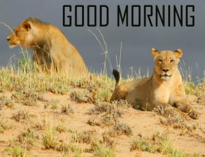 Animal Good Morning Images Wallpaper HD Download