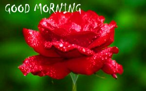 Good Morning Sites Images Wallpaper