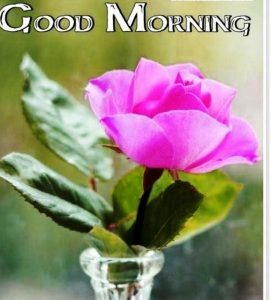 Gud Morning Pictures Images With Flower