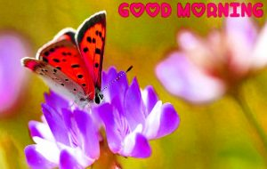 Free Good Morning Images Pics Images Download