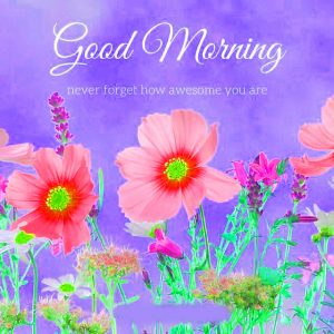 Good Morning Images Photo Pics With Flower