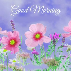 Gud Morning Pictures Wallpaper Download