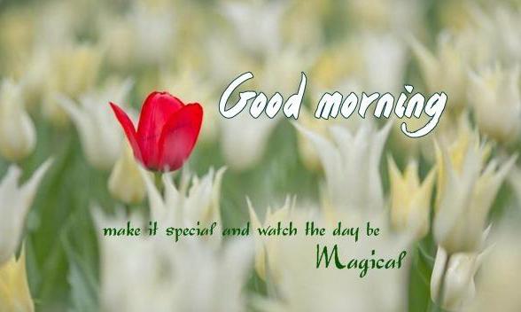 Good Morning Images Wallpaper Pics Photo 12500 +{ Updates Download }