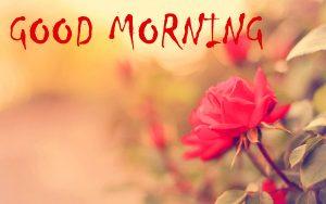 Good Morning Status Photo Pics Download