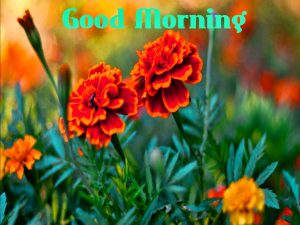 Free Best Happy Good Morning Images With Flower
