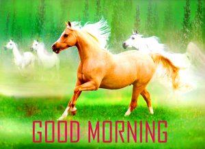 Animal Good Morning Images Photo Pics Download