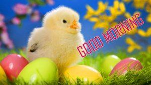 Animal Good Morning Images Download