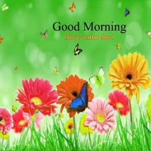 Gud Morning Pictures Images Wallpaper For Whatsaap