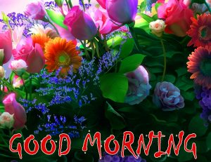Good Morning Status Images Photo For Whatsaap