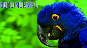 Animal Good Morning Images Photo Pics Free Download