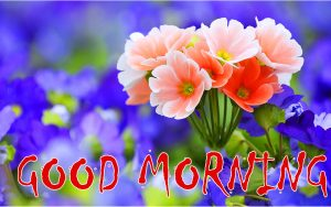 Good Morning Status Images Photo Pics Download