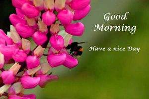 Good Morning Photo Pictures Images Wallpaper For Her