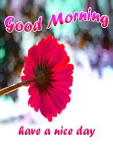 Stickers Good Morning Images With Flower Free Download In hd