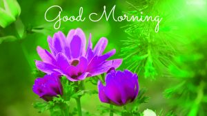 New HD Good Morning Images Photo Pics Free Download With Flower