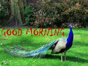 Good Morning Status Images Pics Download