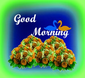 Gud Morning Pictures Images Download