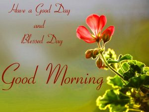 Free Best Happy Good Morning Pictures Download