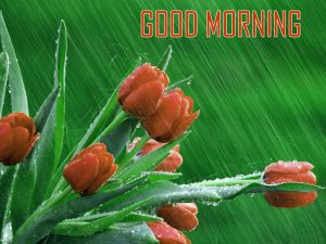 Top HD Good Morning Images Photo Picture Download