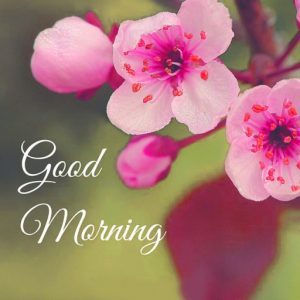 Good Morning Images Wallpaper Photo Download