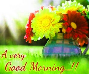 Free Flower Good Morning Images Pics Download