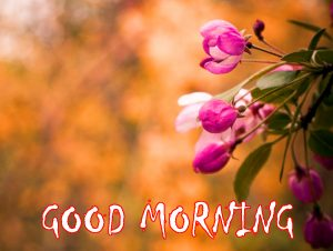 Flower HD Good Morning Images Photo Pics Download