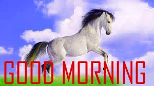 Animal Good Morning Images HD Free Download