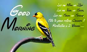 Free Best Happy Good Morning Photo Pics Download